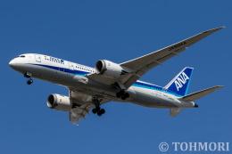 遠森一郎さんが、福岡空港で撮影した全日空 787-8 Dreamlinerの航空フォト(飛行機 写真・画像)
