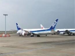 Smyth Newmanさんが、羽田空港で撮影した全日空 787-8 Dreamlinerの航空フォト(飛行機 写真・画像)