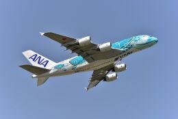 kotaちゃんさんが、成田国際空港で撮影した全日空 A380-841の航空フォト(飛行機 写真・画像)
