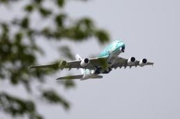 m_aereo_iさんが、成田国際空港で撮影した全日空 A380-841の航空フォト(飛行機 写真・画像)