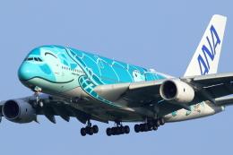 こだしさんが、成田国際空港で撮影した全日空 A380-841の航空フォト(飛行機 写真・画像)