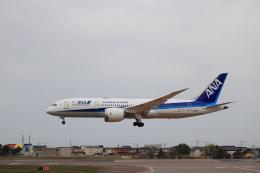 Tomochanさんが、函館空港で撮影した全日空 787-8 Dreamlinerの航空フォト(飛行機 写真・画像)