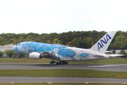 まーちらぴっどさんが、成田国際空港で撮影した全日空 A380-841の航空フォト(飛行機 写真・画像)