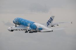 kuraykiさんが、成田国際空港で撮影した全日空 A380-841の航空フォト(飛行機 写真・画像)