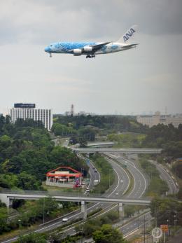 flytaka78さんが、成田国際空港で撮影した全日空 A380-841の航空フォト(飛行機 写真・画像)