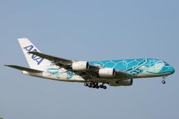 SGR RT 改さんが、成田国際空港で撮影した全日空 A380-841の航空フォト(飛行機 写真・画像)