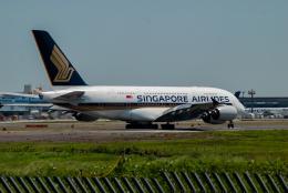 リゾッチャ(紫)さんが、成田国際空港で撮影したシンガポール航空 A380-841の航空フォト(飛行機 写真・画像)
