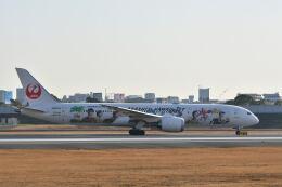 天心さんが、伊丹空港で撮影した日本航空 787-9の航空フォト(飛行機 写真・画像)