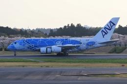 anyongさんが、成田国際空港で撮影した全日空 A380-841の航空フォト(飛行機 写真・画像)