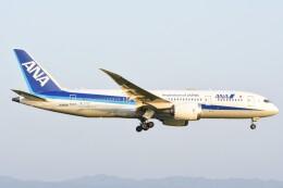 M.Tさんが、関西国際空港で撮影した全日空 787-8 Dreamlinerの航空フォト(飛行機 写真・画像)