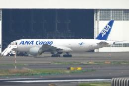 チャレンジャーさんが、羽田空港で撮影した全日空 777-F81の航空フォト(飛行機 写真・画像)