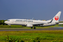 rokko2000さんが、伊丹空港で撮影した日本航空 737-846の航空フォト(飛行機 写真・画像)