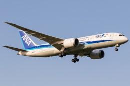 航空フォト:JA827A 全日空 787-8 Dreamliner