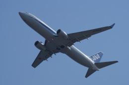 神宮寺ももさんが、関西国際空港で撮影した全日空 737-881の航空フォト(飛行機 写真・画像)