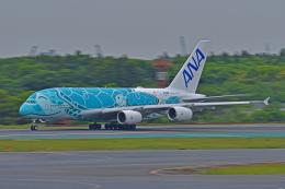 Souma2005さんが、成田国際空港で撮影した全日空 A380-841の航空フォト(飛行機 写真・画像)