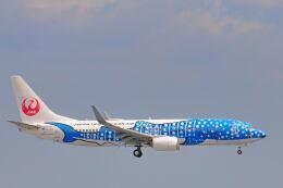 シグナス021さんが、羽田空港で撮影した日本トランスオーシャン航空 737-8Q3の航空フォト(飛行機 写真・画像)