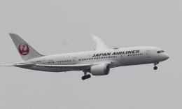 新城 JAL alpha rainbowさんが、伊丹空港で撮影した日本航空 787-8 Dreamlinerの航空フォト(飛行機 写真・画像)