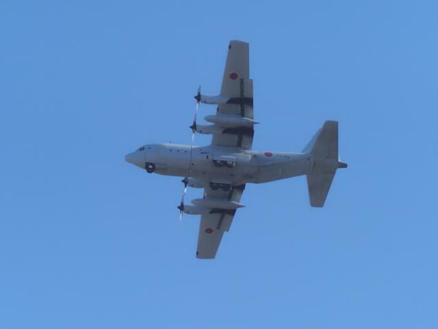 県央ところじすとさんが、厚木飛行場で撮影した海上自衛隊 C-130Rの航空フォト(飛行機 写真・画像)