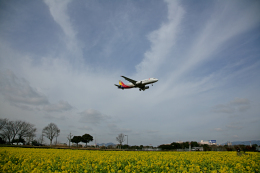 tsubameさんが、福岡空港で撮影したアシアナ航空 A320-232の航空フォト(飛行機 写真・画像)