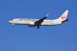 メンチカツさんが、羽田空港で撮影した日本航空 737-846の航空フォト(飛行機 写真・画像)
