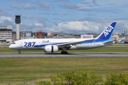 Deepさんが、伊丹空港で撮影した全日空 787-8 Dreamlinerの航空フォト(飛行機 写真・画像)