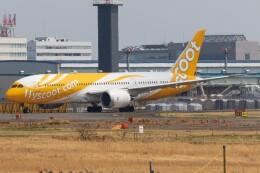 walker2000さんが、成田国際空港で撮影したスクート 787-8 Dreamlinerの航空フォト(飛行機 写真・画像)