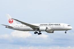 M.Tさんが、関西国際空港で撮影した日本航空 787-8 Dreamlinerの航空フォト(飛行機 写真・画像)