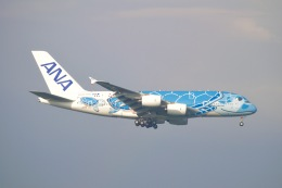 goshiさんが、成田国際空港で撮影した全日空 A380-841の航空フォト(飛行機 写真・画像)
