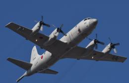 チャーリーマイクさんが、習志野演習場で撮影した海上自衛隊 P-3Cの航空フォト(飛行機 写真・画像)