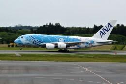 OMAさんが、成田国際空港で撮影した全日空 A380-841の航空フォト(飛行機 写真・画像)