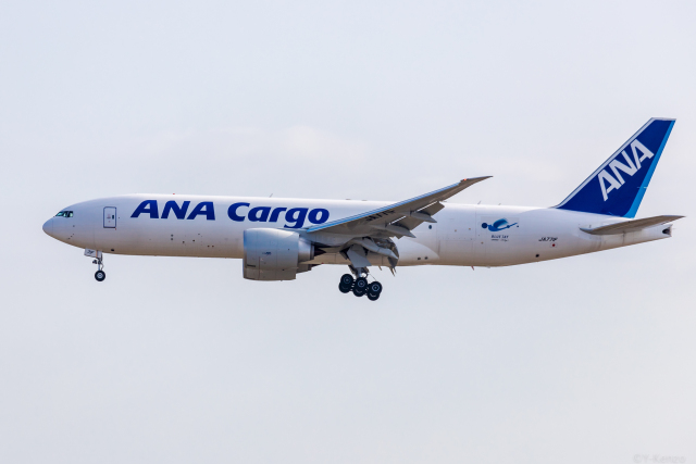 Y-Kenzoさんが、成田国際空港で撮影した全日空 777-F81の航空フォト(飛行機 写真・画像)