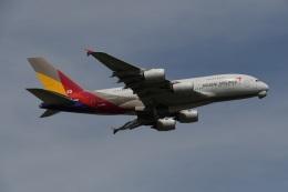 Tarochanさんが、成田国際空港で撮影したアシアナ航空 A380-841の航空フォト(飛行機 写真・画像)