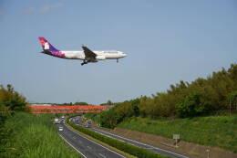 IMP.TIさんが、成田国際空港で撮影したハワイアン航空 A330-243の航空フォト(飛行機 写真・画像)