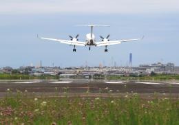 LOTUSさんが、八尾空港で撮影した陸上自衛隊 LR-2の航空フォト(飛行機 写真・画像)
