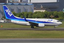 キイロイトリさんが、伊丹空港で撮影した全日空 737-781の航空フォト(飛行機 写真・画像)