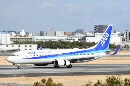 どんちんさんが、伊丹空港で撮影した全日空 737-881の航空フォト(飛行機 写真・画像)