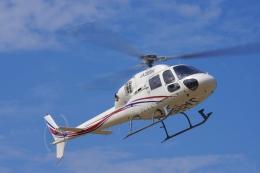 ラムさんが、静岡ヘリポートで撮影した静岡エアコミュータ AS355N Ecureuil 2の航空フォト(飛行機 写真・画像)