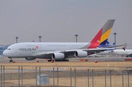 fly A340さんが、成田国際空港で撮影したアシアナ航空 A380-841の航空フォト(飛行機 写真・画像)