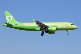 kuraykiさんが、成田国際空港で撮影したS7航空 A320-214の航空フォト(飛行機 写真・画像)