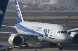 エルさんが、成田国際空港で撮影した全日空 787-8 Dreamlinerの航空フォト(飛行機 写真・画像)