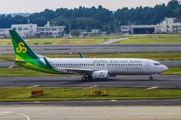 rokko2000さんが、成田国際空港で撮影した春秋航空日本 737-86Nの航空フォト(飛行機 写真・画像)
