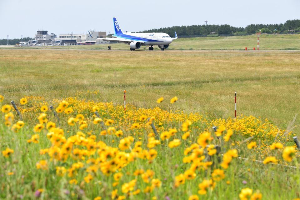 だだちゃ豆さんの全日空 Airbus A320neo (JA214A) 航空フォト
