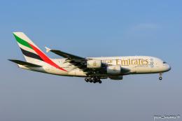 ぱん_くまさんが、成田国際空港で撮影したエミレーツ航空 A380-861の航空フォト(飛行機 写真・画像)