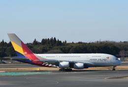 チャーリーマイクさんが、成田国際空港で撮影したアシアナ航空 A380-841の航空フォト(飛行機 写真・画像)