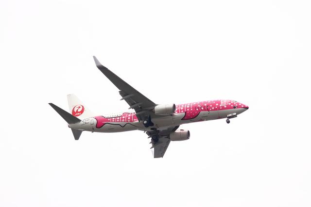 不揃いさんが、羽田空港で撮影した日本トランスオーシャン航空 737-8Q3の航空フォト(飛行機 写真・画像)