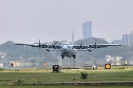 juntamiさんが、厚木飛行場で撮影した海上自衛隊 C-130Rの航空フォト(飛行機 写真・画像)