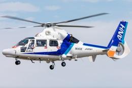 T spotterさんが、名古屋飛行場で撮影したオールニッポンヘリコプター AS365N3 Dauphin 2の航空フォト(飛行機 写真・画像)