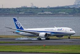 SGR RT 改さんが、羽田空港で撮影した全日空 787-8 Dreamlinerの航空フォト(飛行機 写真・画像)