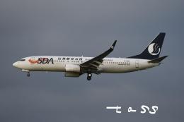 tassさんが、成田国際空港で撮影した山東航空 737-85Nの航空フォト(飛行機 写真・画像)