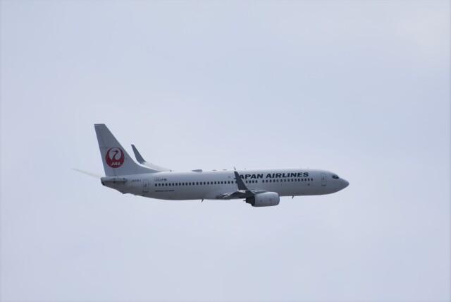 ぬま_FJHさんが、羽田空港で撮影した日本航空 737-846の航空フォト(飛行機 写真・画像)